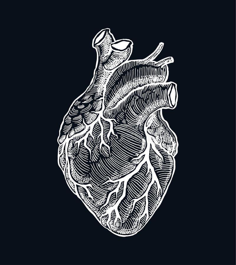 Realistisch menselijk hart vector illustratie