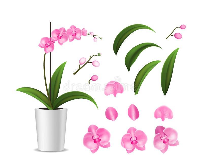 Realistische ausführliche eingemachte tropische Orchidee 3d und Element-Blumenblatt, Stiel und Topf Vektor stock abbildung