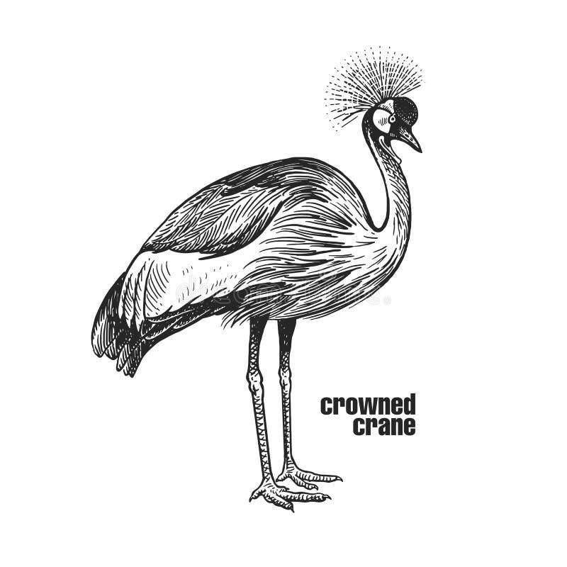 Realistische bekroonde kraanvogel Zwart-witte grafiek vector illustratie