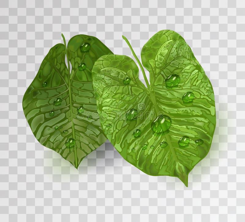 Realistische bladelementen met waterdalingen, dauw groene installaties in 3d stijl element van vectordieblad op witte achtergrond royalty-vrije illustratie
