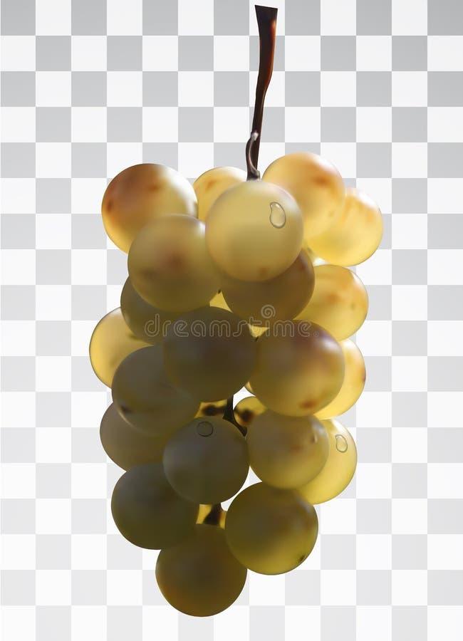 Realistische bos van druiven op een transparante achtergrond royalty-vrije illustratie