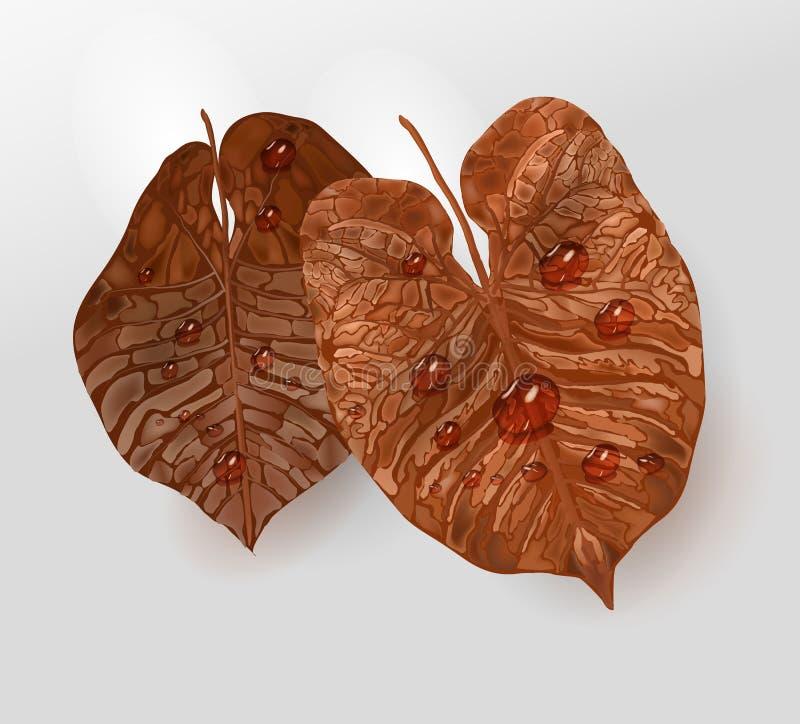 Realistische bruin-gele bladelementen met waterdalingen, dauw vectordiebladelement voor ontwerp wordt geïsoleerd vector illustratie