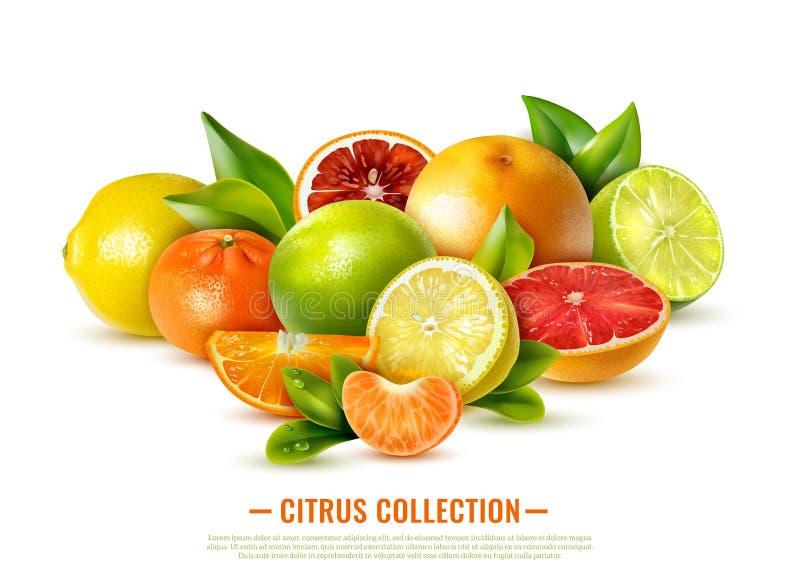 Realistische Citrusvruchtenillustratie royalty-vrije illustratie