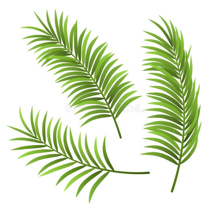 Realistische die de illustratiereeks van het palmblad, op wit wordt geïsoleerd vector illustratie