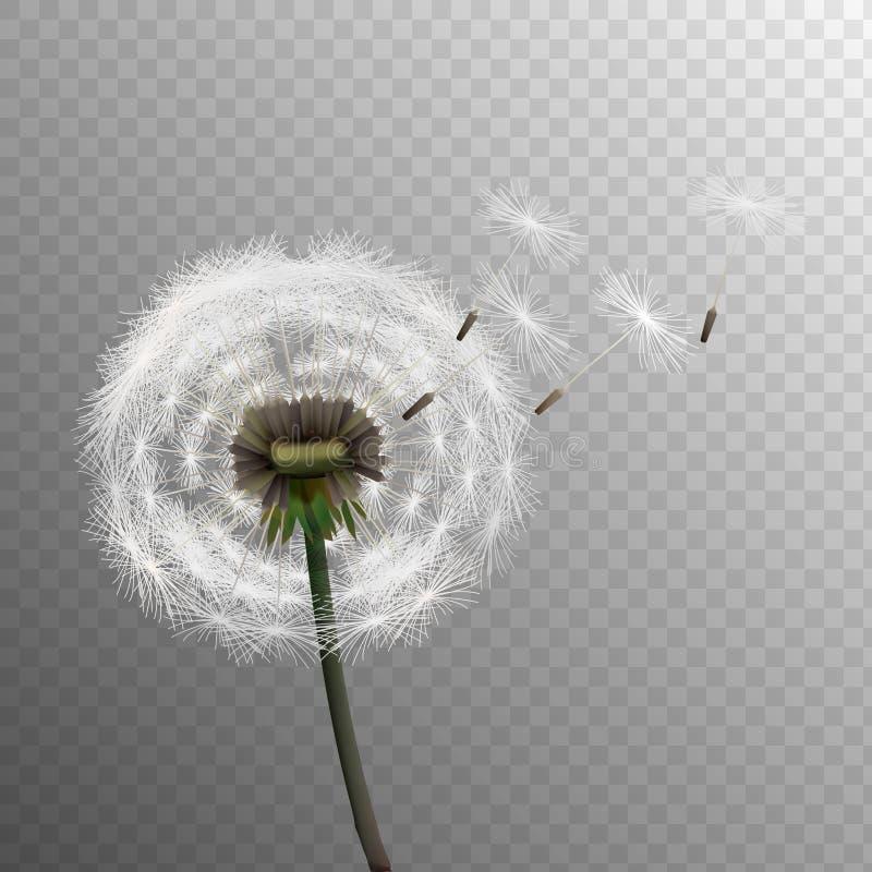 Realistische die paardebloemen van de voorraad de vectorillustratie op een transparante achtergrond worden geïsoleerd zaad Eps 10 vector illustratie