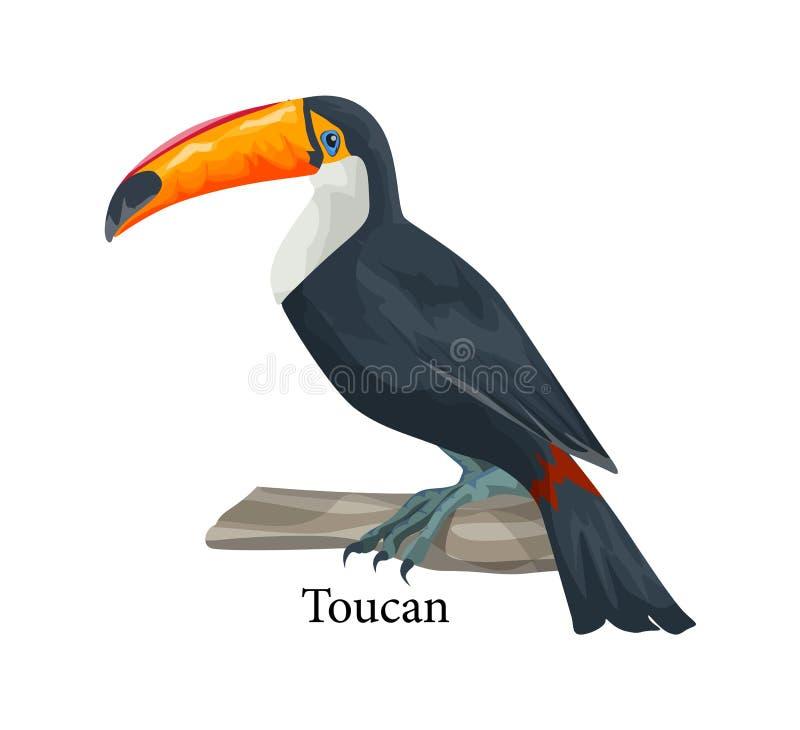 Realistische exotische tropische toekanvogel Aanbiddelijk dier vector illustratie