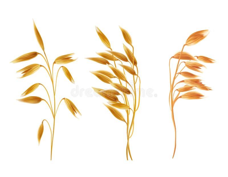 Realistische Haferohren mit seads, Körner, Getreide eingestellt stock abbildung