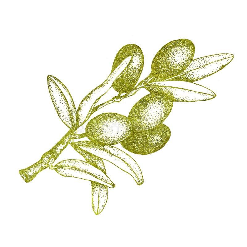 Realistische illustratie van zwarte en groene die olijventak op witte achtergrond wordt geïsoleerd Ontwerp voor olijfolie, natuur stock afbeelding
