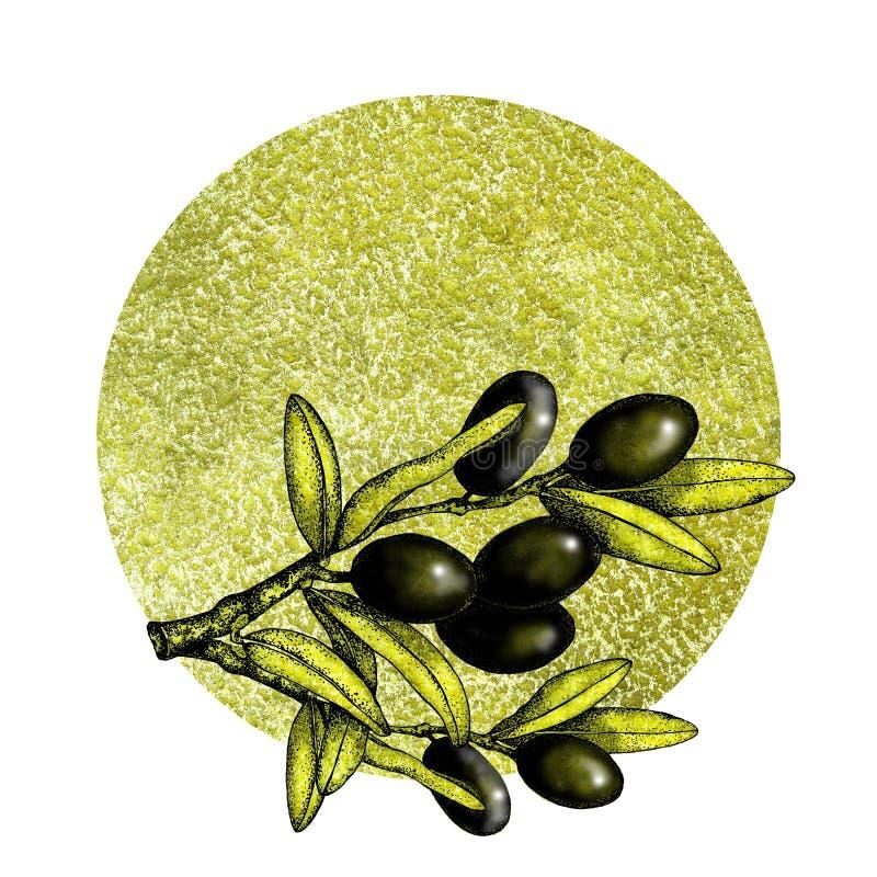 Realistische illustratie van zwarte en groene olijventak die op groene achtergrond wordt geïsoleerd Ontwerp voor olijfolie, natuu royalty-vrije stock foto