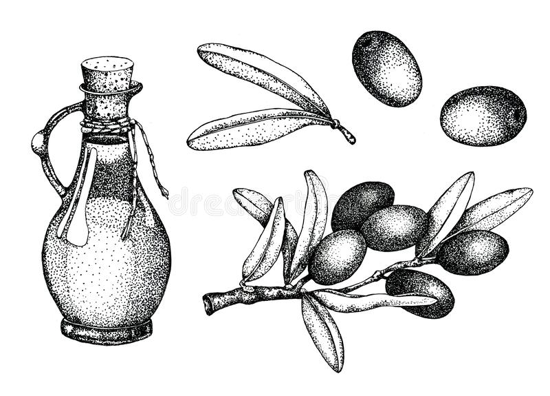 Realistische illustratiereeks van zwarte en groene die olijventak op groene achtergrond wordt geïsoleerd Ontwerp voor olijfolie,  royalty-vrije illustratie