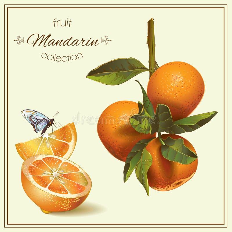 Realistische Illustration der Mandarine stock abbildung