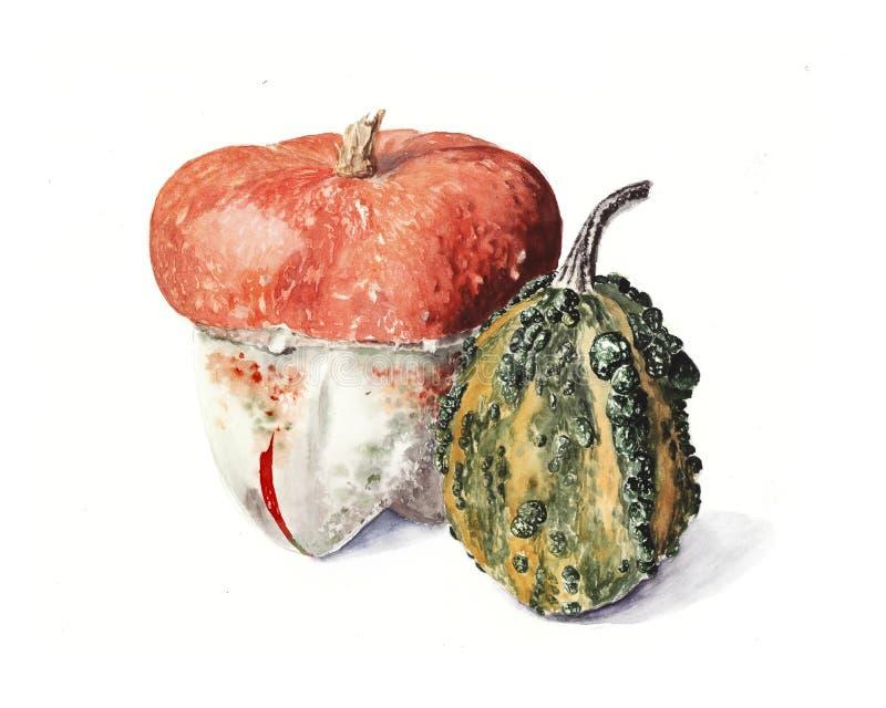 realistische Illustration des Aquarells des hellen Kürbises lizenzfreies stockfoto