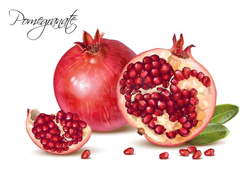 Realistische Illustration des Granatapfels lizenzfreie abbildung