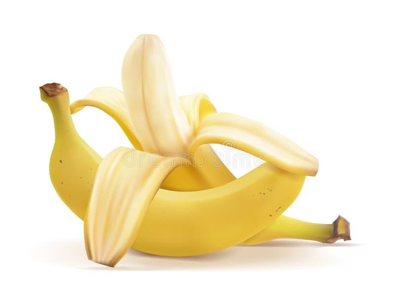 Realistische Illustration des Vektors von Bananen stock abbildung