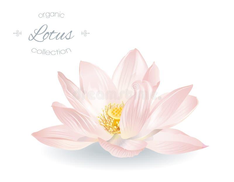 Realistische Illustration Lotuss vektor abbildung