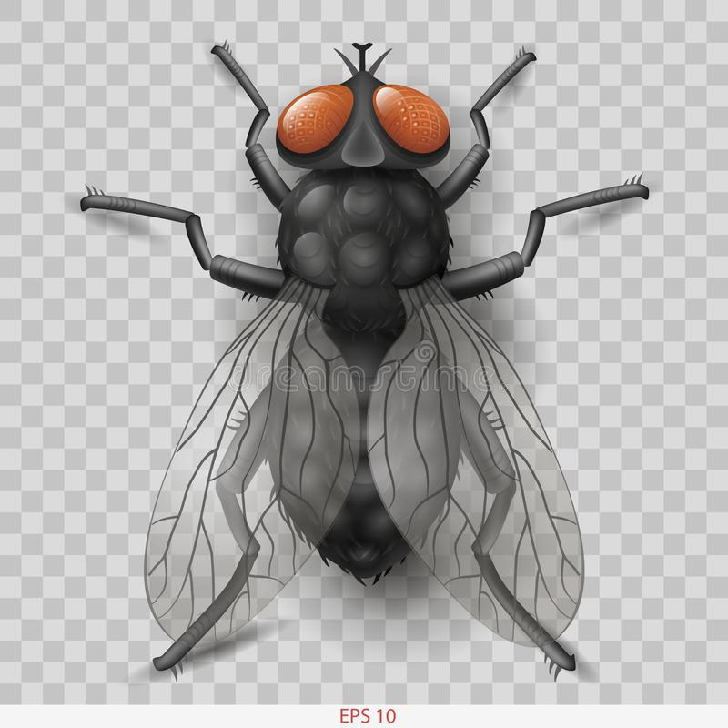 Realistische insectvlieg in vectorinsectvlieg royalty-vrije illustratie