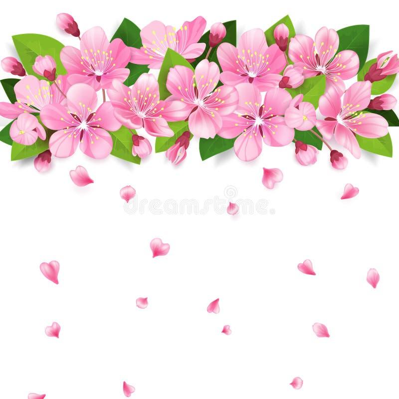 Realistische Kirsche Kirschblütes Japan oder Apfelbaumast mit dem Blühen blüht Rosa Blumengrenze mit den fallenden Blumenblättern lizenzfreie abbildung