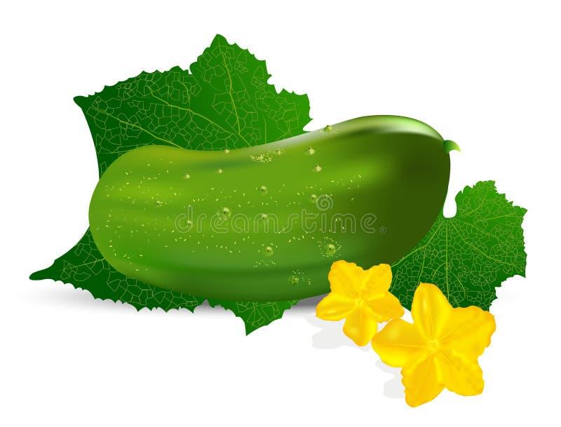 Realistische komkommer met blad en bloem stock illustratie