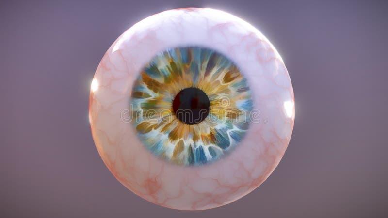 Realistische menselijke oogappel op donkere grijze achtergrond, 3D illustratie royalty-vrije illustratie