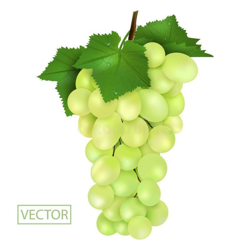 Realistische Rijpe groene druiven en bladeren met dalingen Het sappige hoge die detail van de fruit 3d illustratie op witte achte stock illustratie