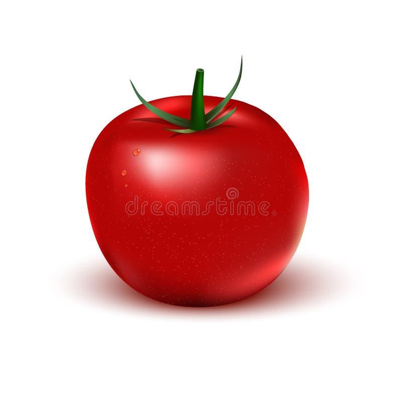 Realistische rode tomaat op een witte achtergrond stock foto's