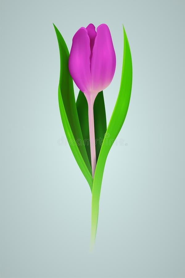Realistische rosa Tulpe 3d Auch im corel abgehobenen Betrag stock abbildung