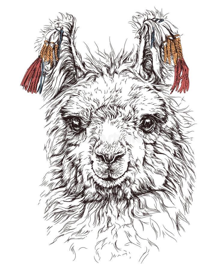 Realistische schets van LAMA Alpaca, op wit stock illustratie
