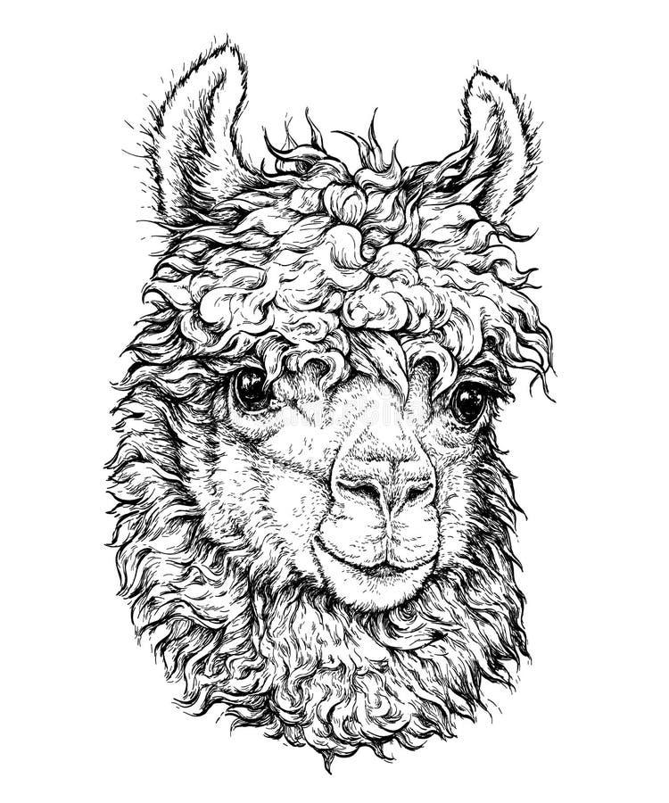 Realistische schets van LAMA Alpaca, zwart-witte die tekening, op wit wordt geïsoleerd vector illustratie
