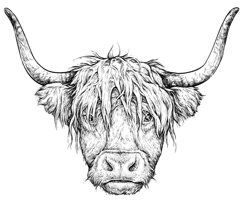 Realistische schets van Schotse Koe, zwart-witte die tekening, vector op wit wordt geïsoleerd royalty-vrije stock afbeeldingen