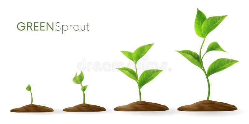 Realistische Sprösslinge 3D Phasen pflanzen das Wachsen Entwicklungskonzept Samenspr?ssling im Boden Sprössling, Anlage, Baumwach lizenzfreie abbildung