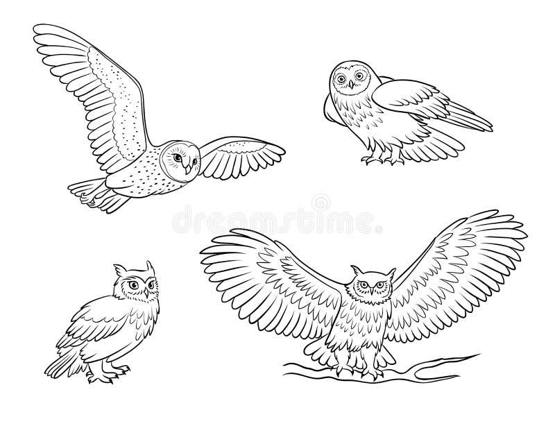 Realistische uilen in overzichten - vectorillustratie royalty-vrije stock fotografie