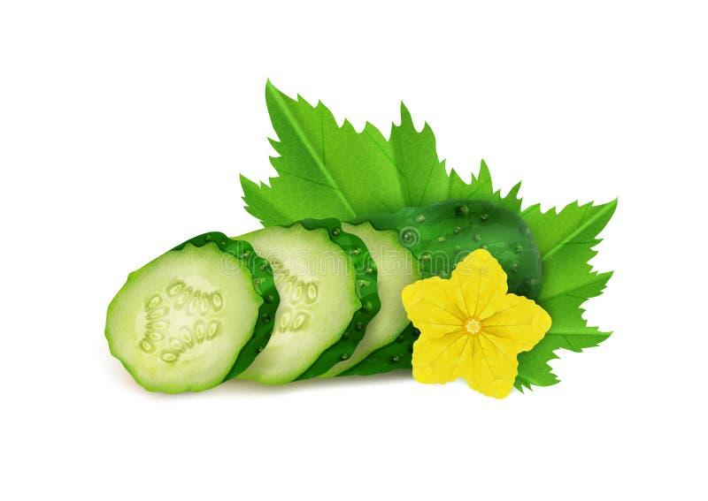 Realistische verse komkommer en van komkommerplakken witte achtergrond, vectorillustratie royalty-vrije illustratie