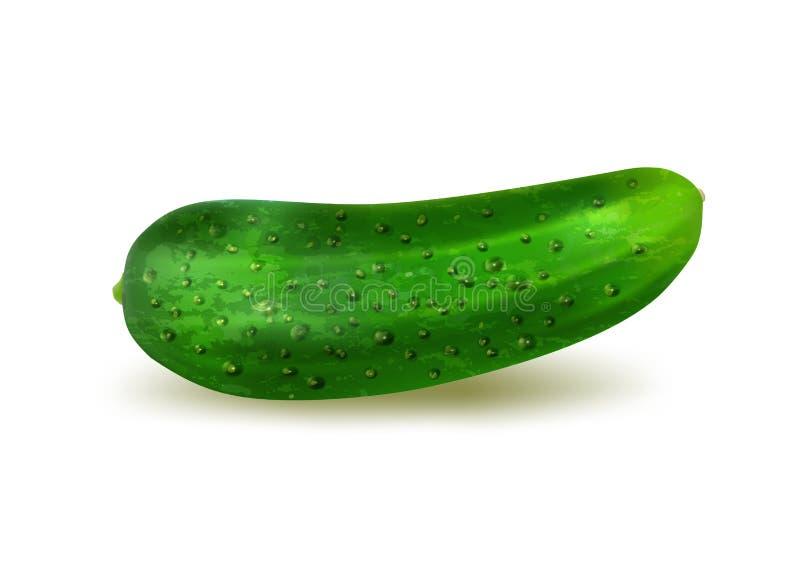 Realistische verse komkommer op een witte achtergrond, vector vector illustratie