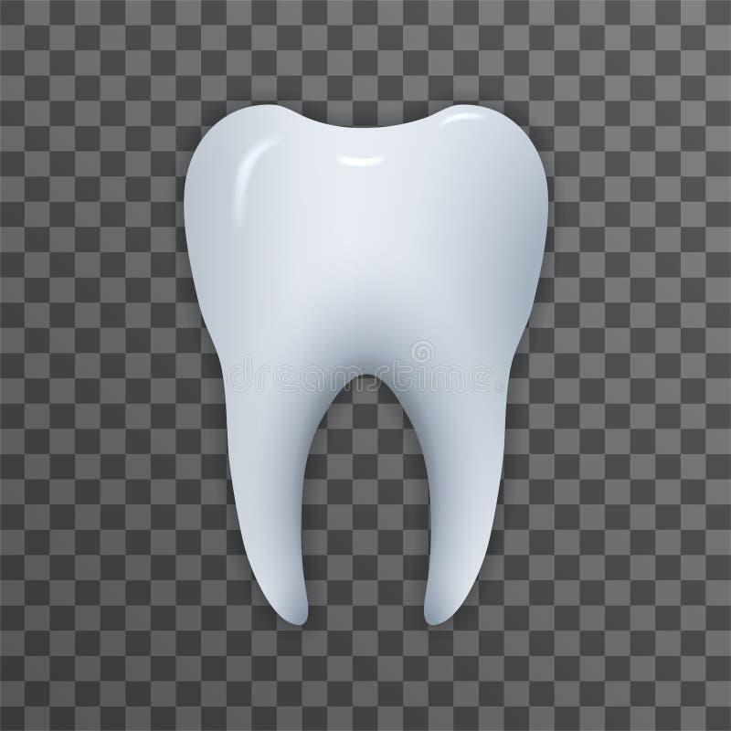 Realistische Zahnillustration vektor abbildung