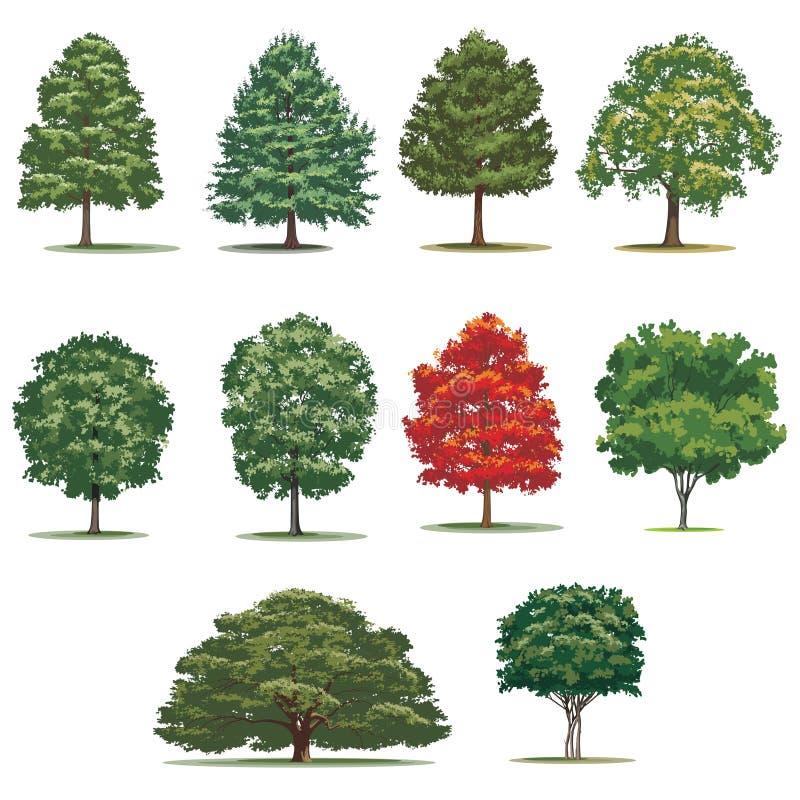 Realistischer Baumsatz Lokalisierte Vektorbäume auf weißem Hintergrund stockfoto