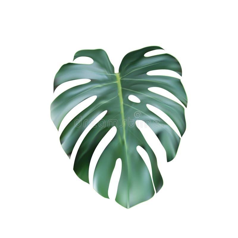 Realistischer grüner tropischer Monstera-Urlaub von der Spitze vektor abbildung