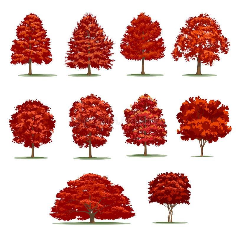 Realistischer Herbstbaumsatz Lokalisierte Vektorbäume auf Weißrückseite lizenzfreie stockbilder