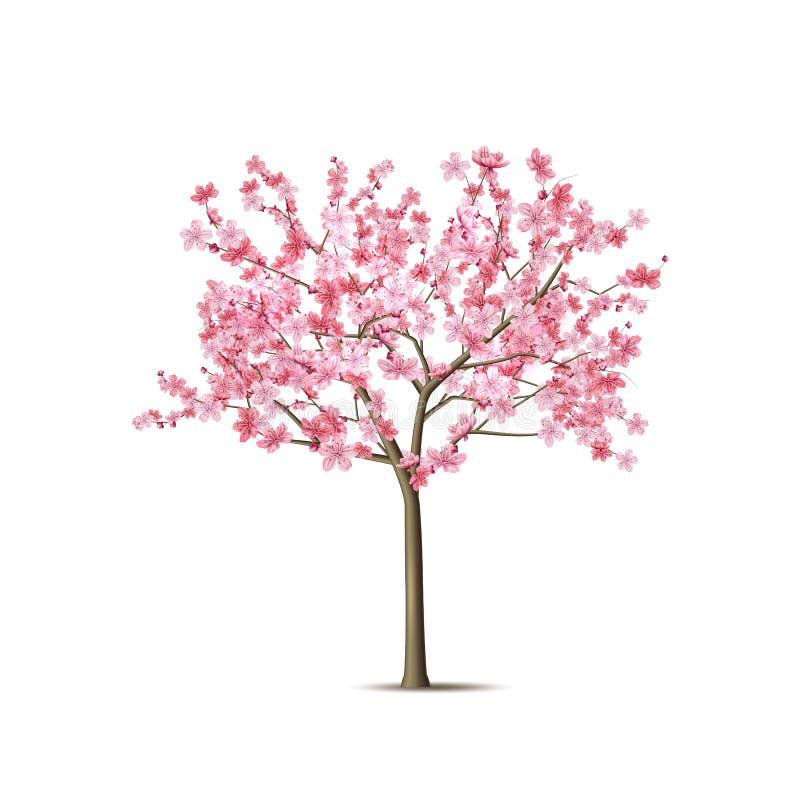 Realistischer Kirschblüte-Baum des Vektors mit dem rosa Blumenblatt lizenzfreie abbildung