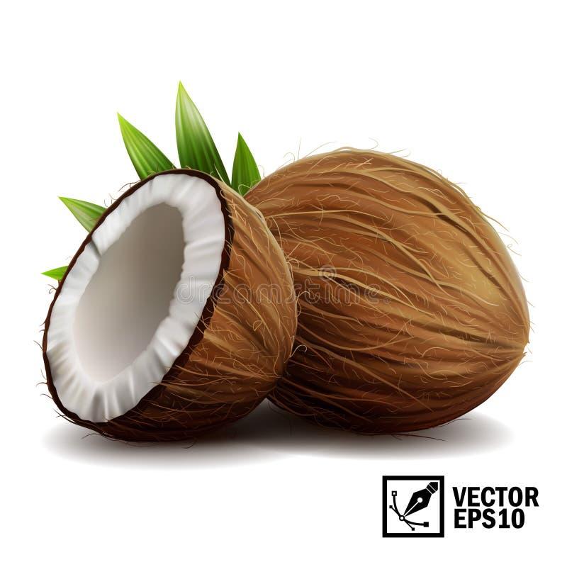realistischer lokalisierter Satz des Vektors 3D ganze Kokosnuss, Kokosnusshälften und Palmblätter stock abbildung
