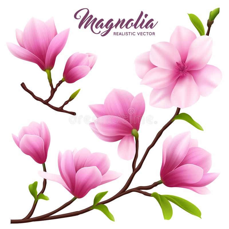 Realistischer Magnolien-Blumen-Ikonen-Satz stock abbildung