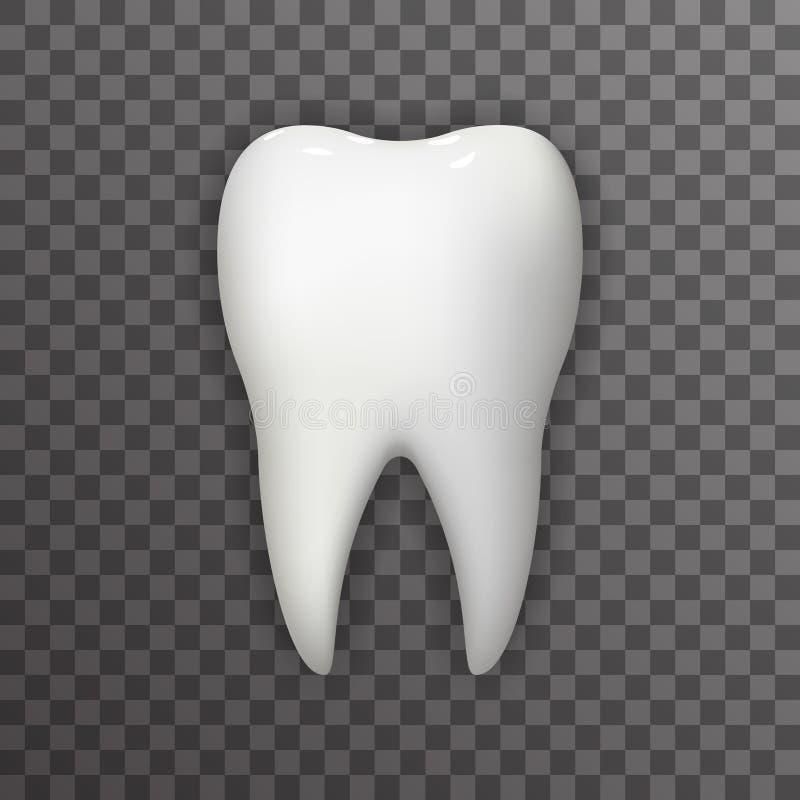 Realistischer Plakat Transperent-Stomatologie-Ikonen-Schablonen-Hintergrund-Spott-hohe Design-Vektor-Illustration des Zahn-3d stock abbildung