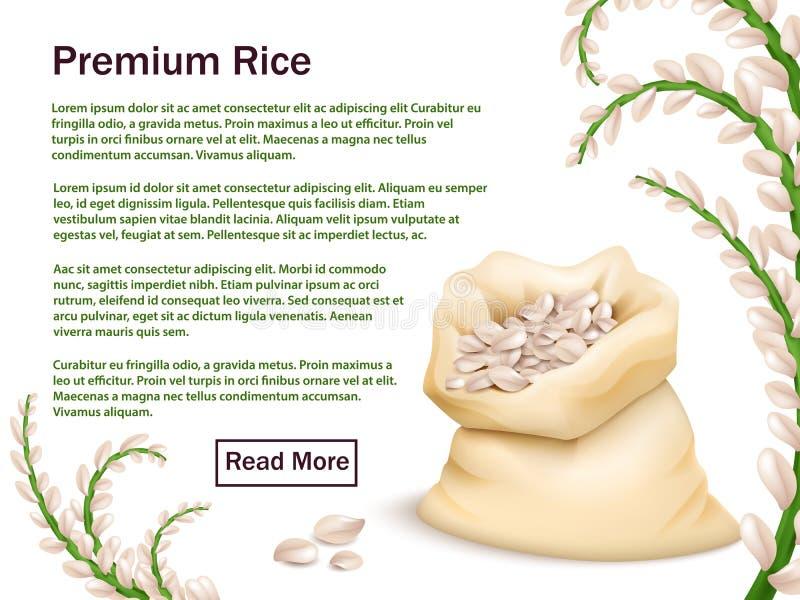 Realistischer Reis, Körner und Ohren vektor abbildung