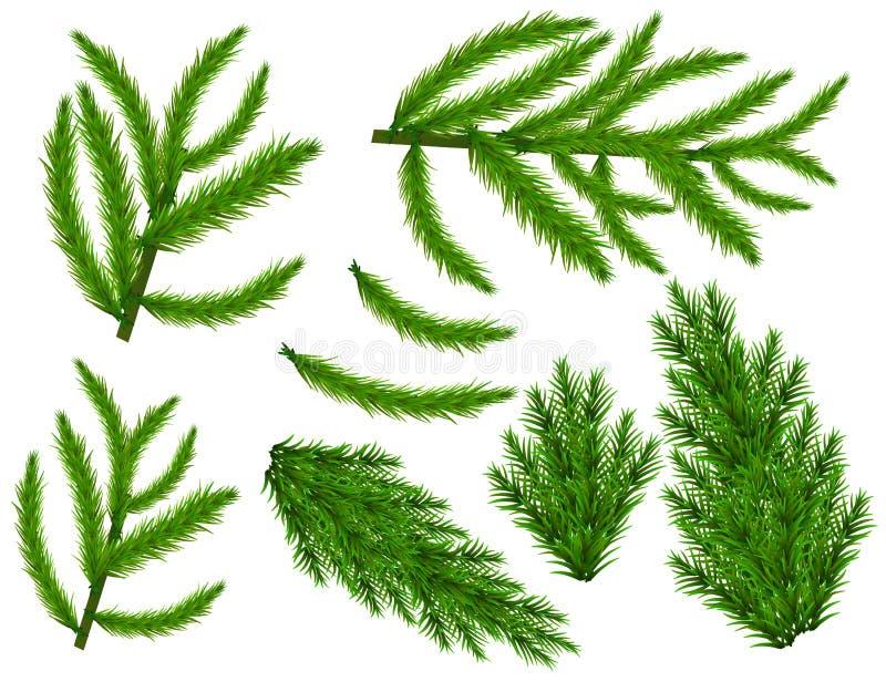 Realistischer Satz grüne Tannenzweige Weihnachtsbaumaste lokalisiert auf weißem Hintergrund für Gruß-Karte, Flieger, Fahnen lizenzfreies stockbild