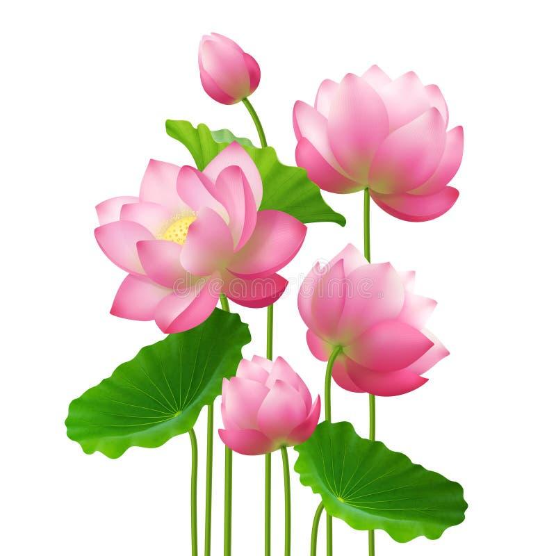 Realistisches Bündel Lotus Flowers lizenzfreie abbildung