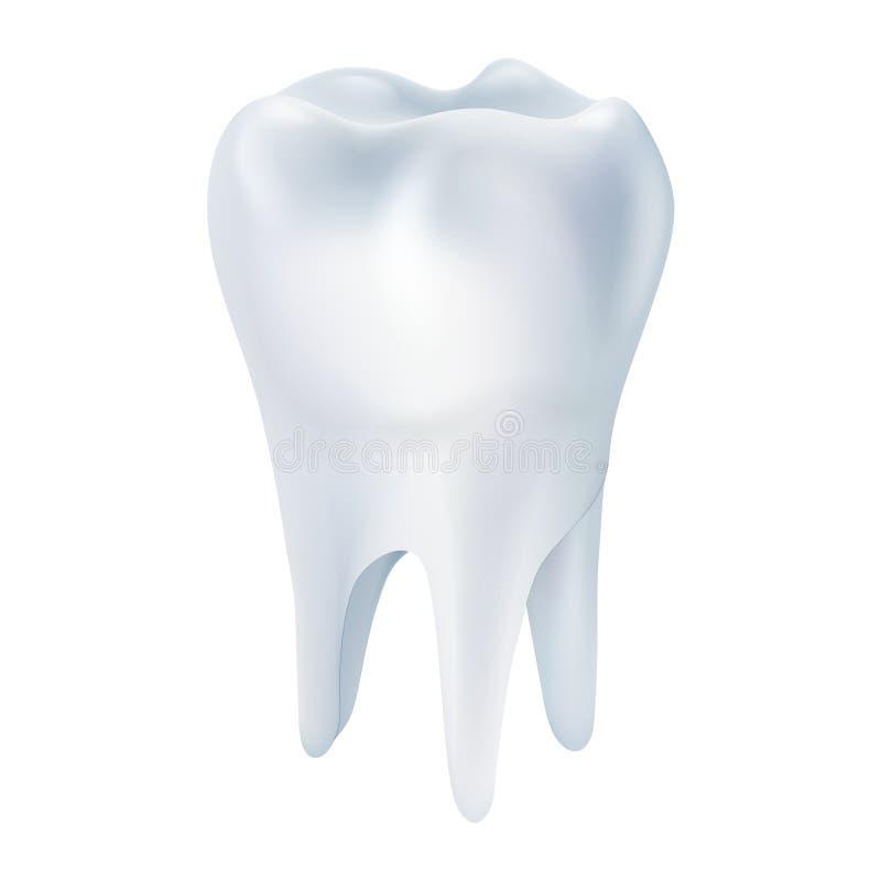 Realistisches Zahn-Plakat vektor abbildung