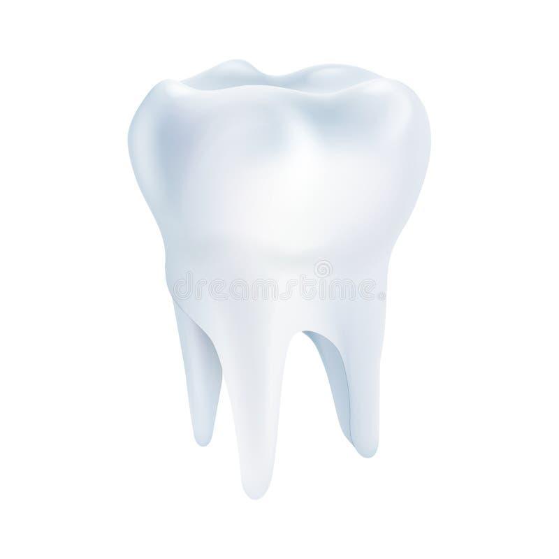 Realistisches Zahn-Plakat lizenzfreie abbildung