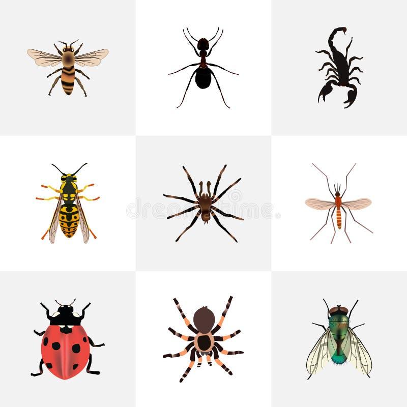 Realistisk bi, giftigt, knott och andra vektorbeståndsdelar Uppsättningen av realistiska symboler för fel inkluderar också spinde stock illustrationer