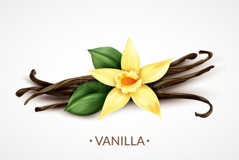 Realistisk bild för vaniljblomma royaltyfri illustrationer