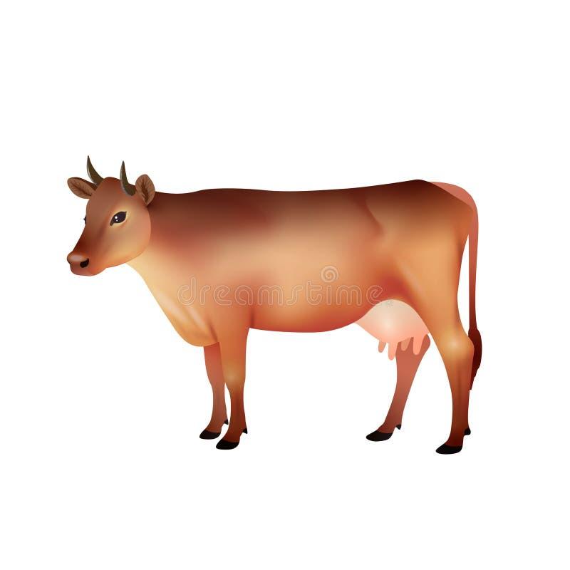 Realistisk brun ko stock illustrationer