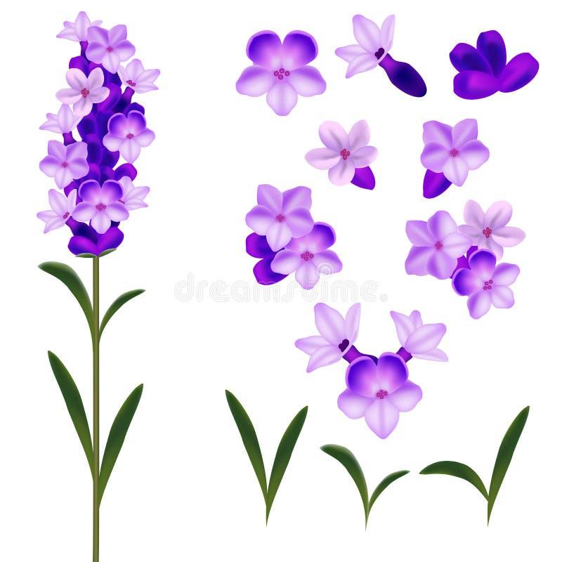 Realistisk detaljerad blommauppsättning för lavendel 3d vektor vektor illustrationer